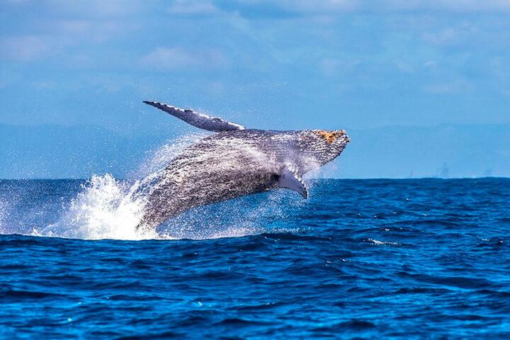 Avistamento de Baleias (de Julho a Outubro)
